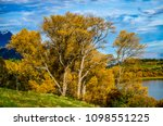 autumn leaves with yellow... | Shutterstock . vector #1098551225