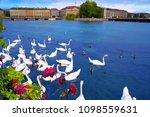 swans in geneve geneva of... | Shutterstock . vector #1098559631