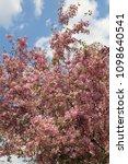 beautiful outdoor image of... | Shutterstock . vector #1098640541