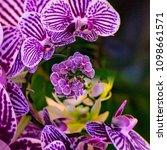 creative phalaenopsis orchids...   Shutterstock . vector #1098661571