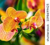 creative orchids flowers design ...   Shutterstock . vector #1098699425