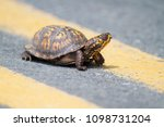 eastern box turtle crossing the ... | Shutterstock . vector #1098731204