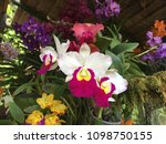 colorful orchids background   Shutterstock . vector #1098750155