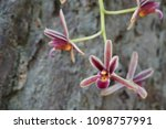 beautiful orchid flower or...   Shutterstock . vector #1098757991