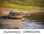 crocodile in liwonde n.p.  ... | Shutterstock . vector #1098822041