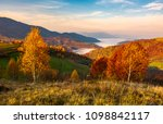 yellow trees on the edge of a... | Shutterstock . vector #1098842117