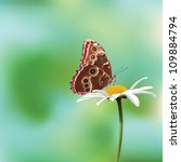 Butterfly On A Flower Vector...