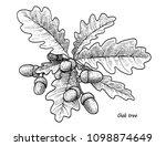 oak tree with acorns... | Shutterstock .eps vector #1098874649