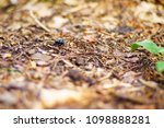 a photo with a very shallow... | Shutterstock . vector #1098888281