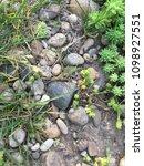 path in the garden. stones... | Shutterstock . vector #1098927551