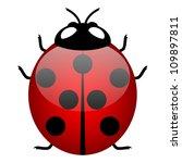 Illustration Of Ladybird ...