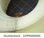 common kestrel  falco...   Shutterstock . vector #1099000004