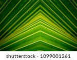 tropical leaf  large foliage ... | Shutterstock . vector #1099001261