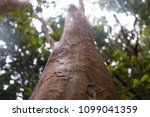 close up of a tree trunk... | Shutterstock . vector #1099041359