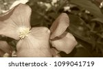 garden costa rica | Shutterstock . vector #1099041719
