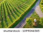 vineyards in moravia  czech... | Shutterstock . vector #1099046585