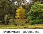tree nature garden | Shutterstock . vector #1099060451