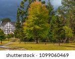 tree nature garden | Shutterstock . vector #1099060469