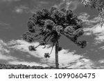 tree nature garden | Shutterstock . vector #1099060475