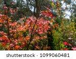 tree nature garden | Shutterstock . vector #1099060481