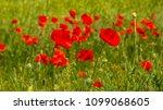 summer sunset at red field of... | Shutterstock . vector #1099068605