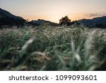 tall grass field as the sunset... | Shutterstock . vector #1099093601