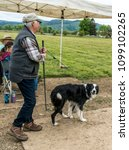 Small photo of Scio, Oregon/USA - May 20, 2018: A shepherd and his sheepdog entered the field to herd sheep in a sheepdog trial.