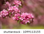 beautiful spring flowers on a... | Shutterstock . vector #1099113155