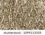 Small photo of The pattern of the bark of the tree. The ages of trees. Some types are used to create new stem walls. The old wall, it will decay and sift out of the trunk.