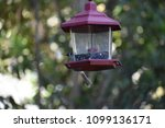 chickadee titmouse songbird... | Shutterstock . vector #1099136171