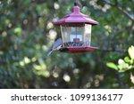 chickadee titmouse songbird... | Shutterstock . vector #1099136177