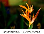 orange flower in direct sunlight   Shutterstock . vector #1099140965