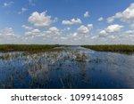 florida wetland in the...   Shutterstock . vector #1099141085