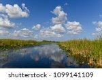 florida wetland in the...   Shutterstock . vector #1099141109
