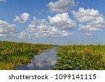 florida wetland in the...   Shutterstock . vector #1099141115