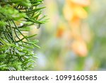 droplet on the pines  dew on... | Shutterstock . vector #1099160585