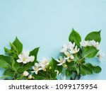 Flowers Of An Apple Tree On A...