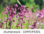close up of a little violet...   Shutterstock . vector #1099195301