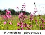close up of a little violet...   Shutterstock . vector #1099195391