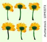 set of sunflowers   Shutterstock .eps vector #10992073
