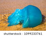 Closeup Of A Blue Jellyfish...