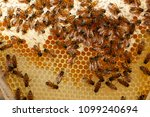 honey bees kept in a bee box... | Shutterstock . vector #1099240694