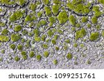 the islets of bright green moss ... | Shutterstock . vector #1099251761