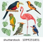 exotic set birds | Shutterstock .eps vector #1099251851