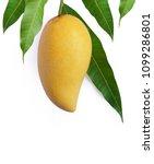 mango fruit isolated on white...   Shutterstock . vector #1099286801