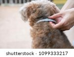 woman wearing a collar for dog  ... | Shutterstock . vector #1099333217