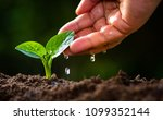 planting sapling and hand... | Shutterstock . vector #1099352144