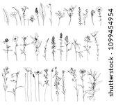 vector set of ink drawing wild...   Shutterstock .eps vector #1099454954