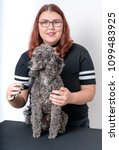 grooming a little poodle in a... | Shutterstock . vector #1099483925
