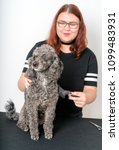 grooming a little poodle in a... | Shutterstock . vector #1099483931